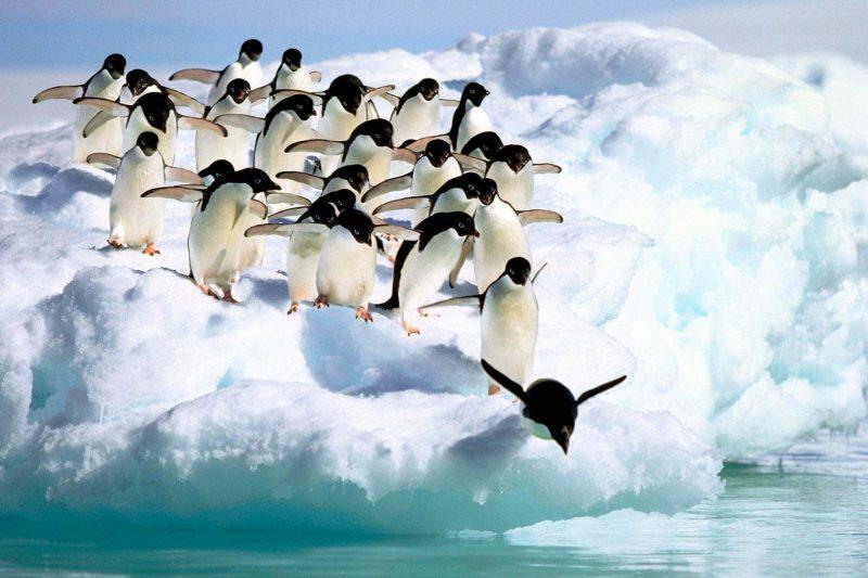 Geleiras – Antártida